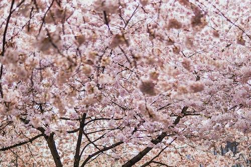 Ilmainen kuvapankkikuva tunnisteilla jousi, kasvikunta, kasvu, kirsikankukka