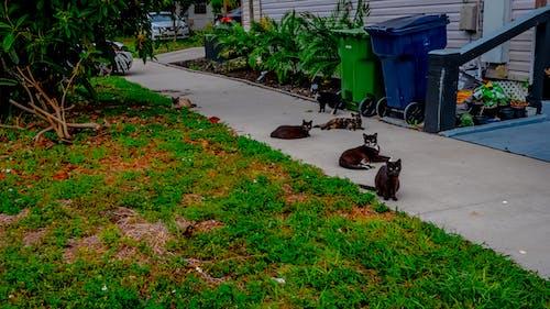 很多猫, 貓 的 免费素材照片