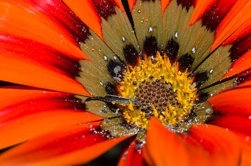 Imagine de stoc gratuită din Adobe Photoshop, apă, floare frumoasa, flori