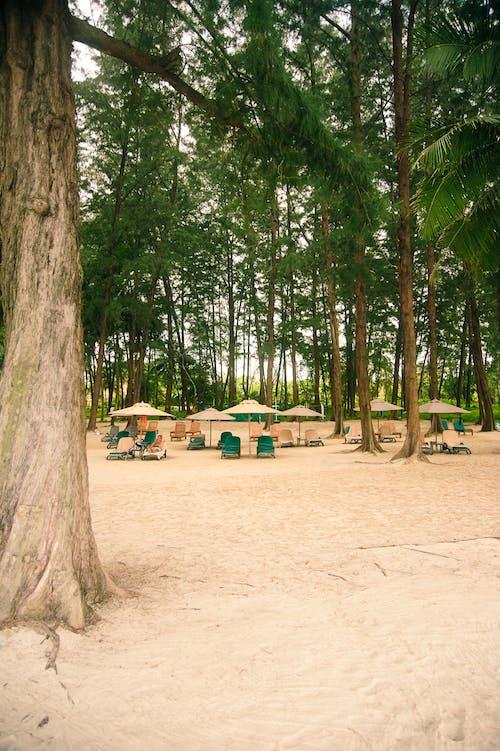 Free stock photo of beach, beach chairs, trees