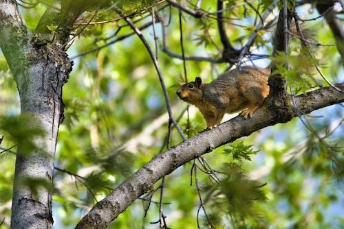 ağaç, hayvan, hayvan fotoğrafçılığı, küçük içeren Ücretsiz stok fotoğraf