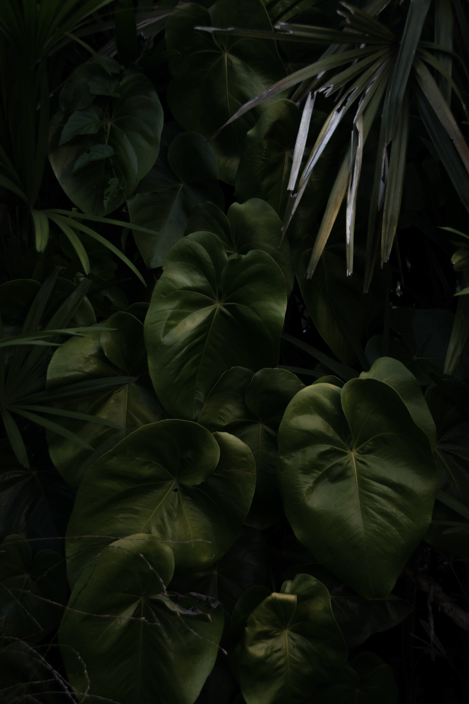 Kostenloses Stock Foto zu blätter, garten, grün, pflanze