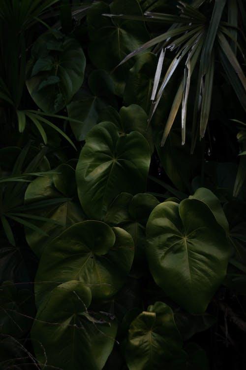 Foto stok gratis Daun-daun, hijau, kebun, kilang