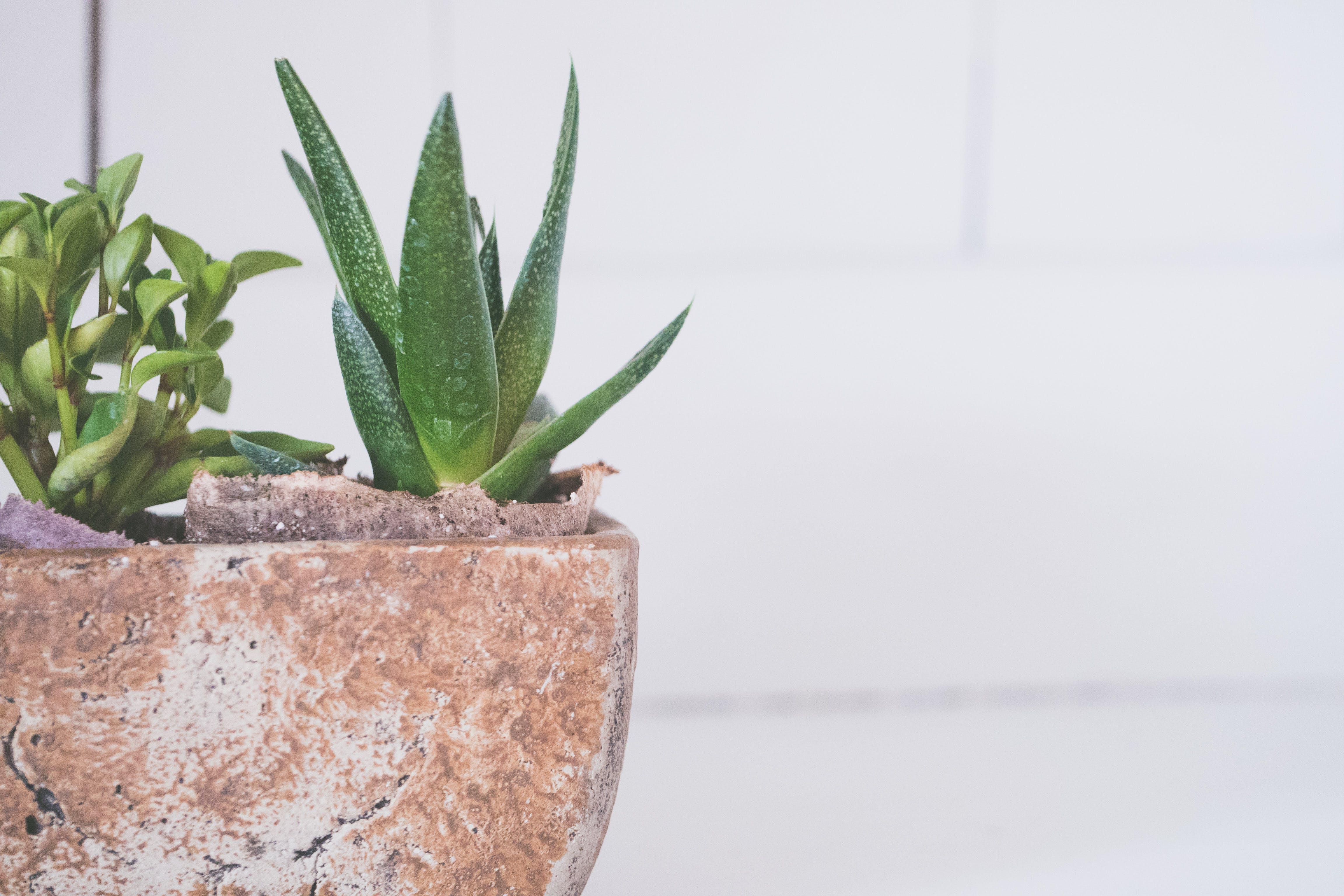 廠, 盆栽, 花盆, 鍋 的 免費圖庫相片