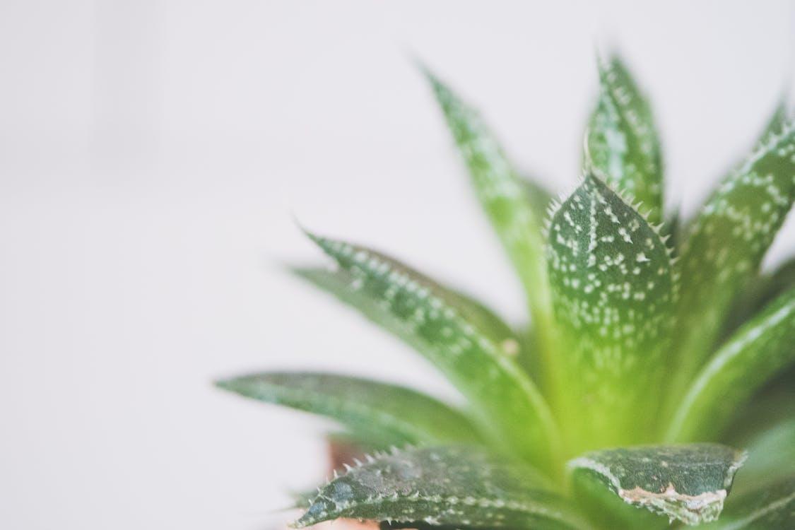 botanisch, dekoration, dornen