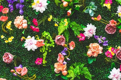 Darmowe zdjęcie z galerii z dekoracja, flora, jaskrawy, jasny