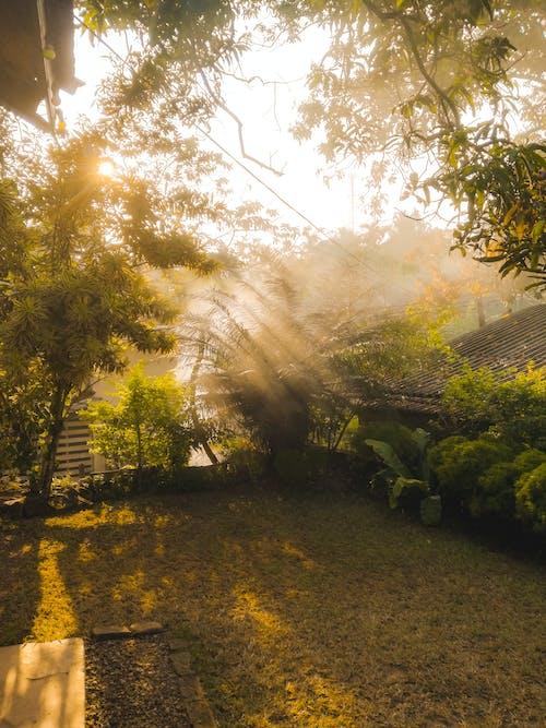 Δωρεάν στοκ φωτογραφιών με ακτίνες ηλίου, Ανατολή ηλίου, αυγή, γρασίδι