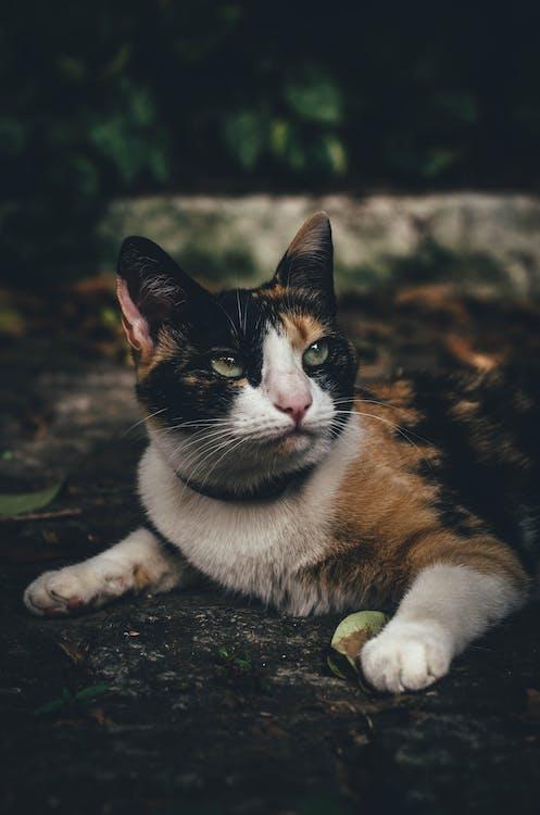 動物, 動物攝影, 可愛