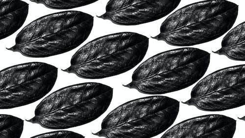 Бесплатное стоковое фото с гравировка, лес, листва, ч-б