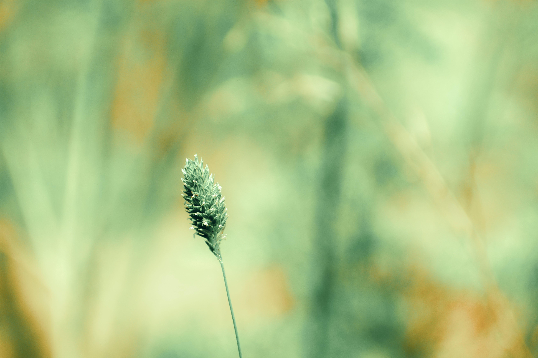 Kostnadsfri bild av färg, fokus, gräs, grön