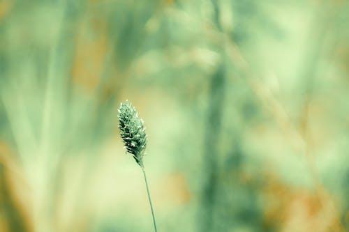 Gratis arkivbilde med dybdeskarphet, farge, fokus, gress