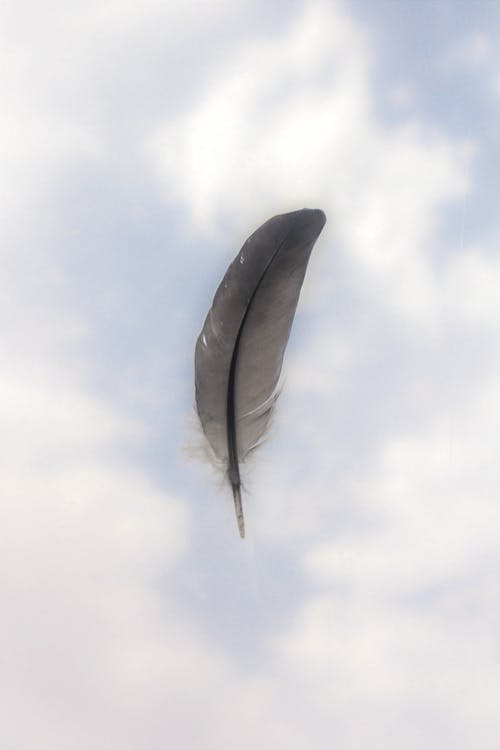 Foto stok gratis alam, awan, biru, bulu