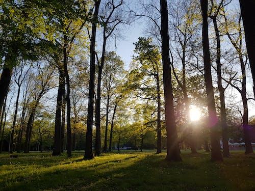 Imagine de stoc gratuită din codru, lumina soarelui