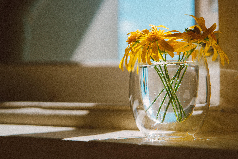 คลังภาพถ่ายฟรี ของ กระจก, ดอกไม้, พฤกษา, แจกัน