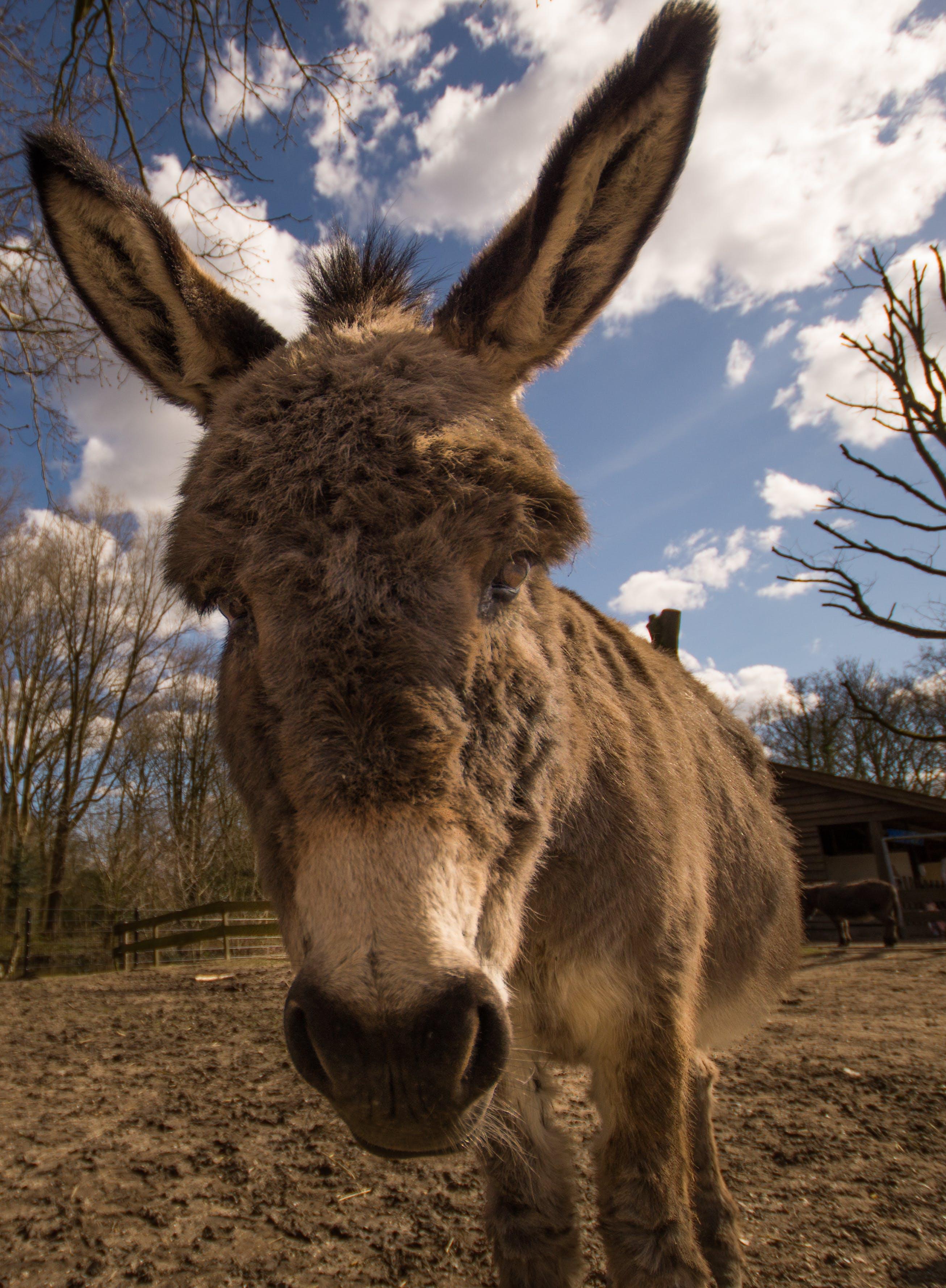 Free stock photo of animal, horse, fauna, donkey