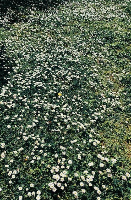 Gratis arkivbilde med fjær, vår, vårblomster