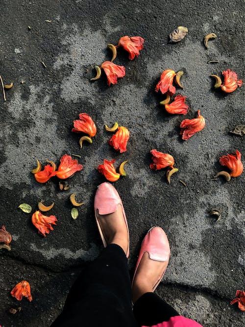 Бесплатное стоковое фото с апельсин, опавшие листья, оранжевые цветы, осенние цвета