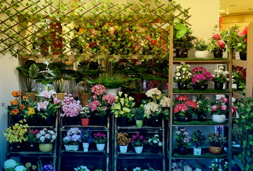 Gratis arkivbilde med blomster, butikk, kunstige blomster, vakre blomster