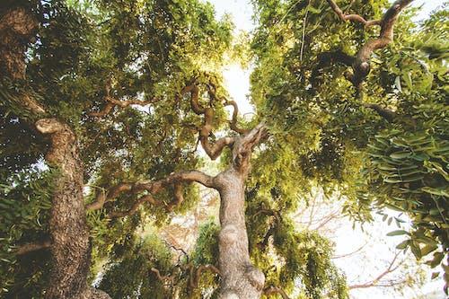 Foto profissional grátis de árvore, aumento, filiais, meio ambiente
