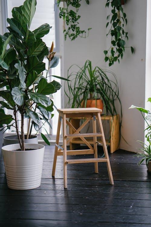 Immagine gratuita di casa, interni, pentola, pianta della casa