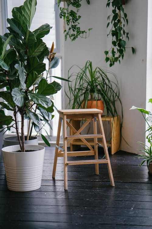 Brown Wooden Ladder Beside Green Plant