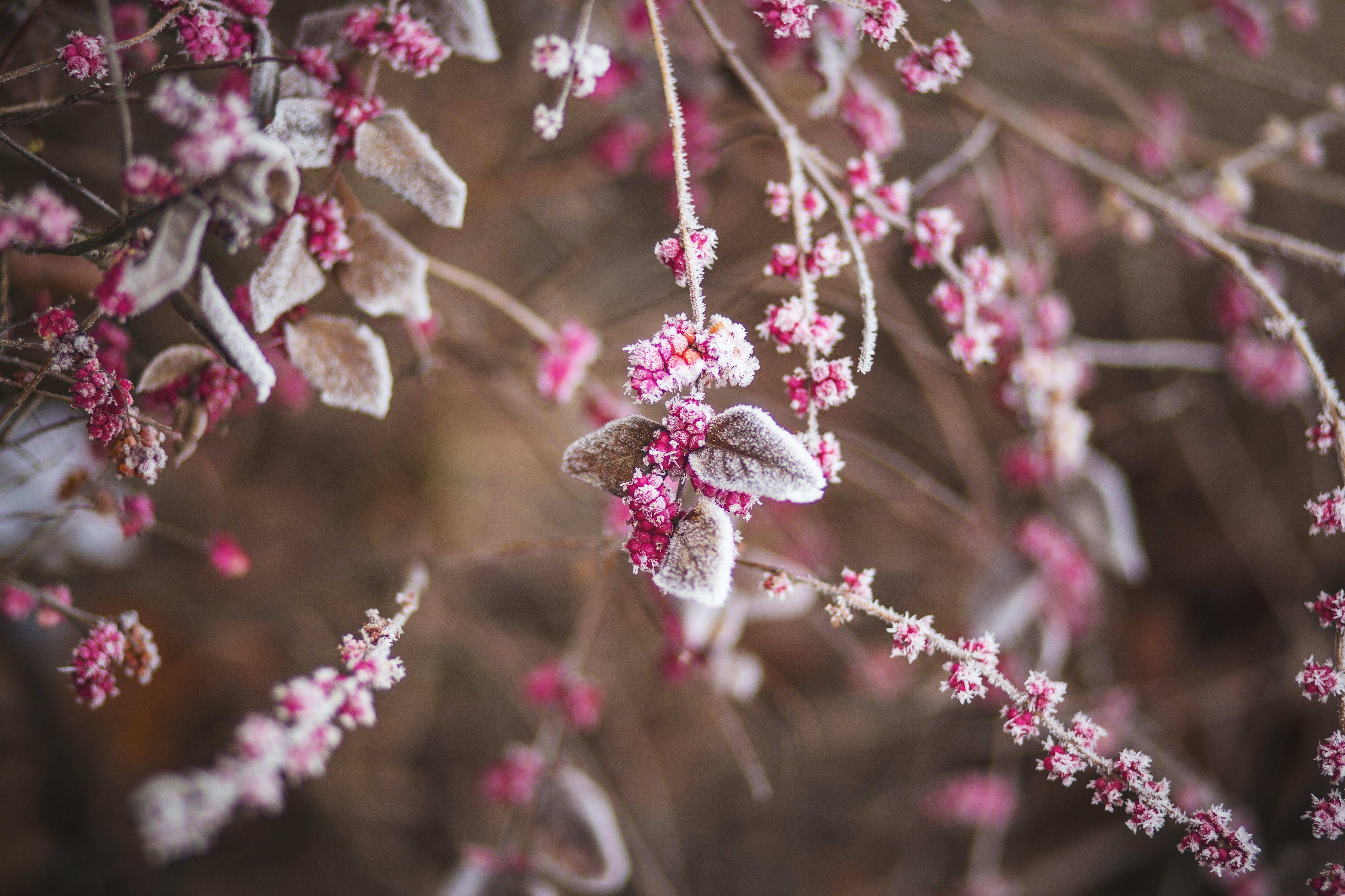 branch, frozen, nature
