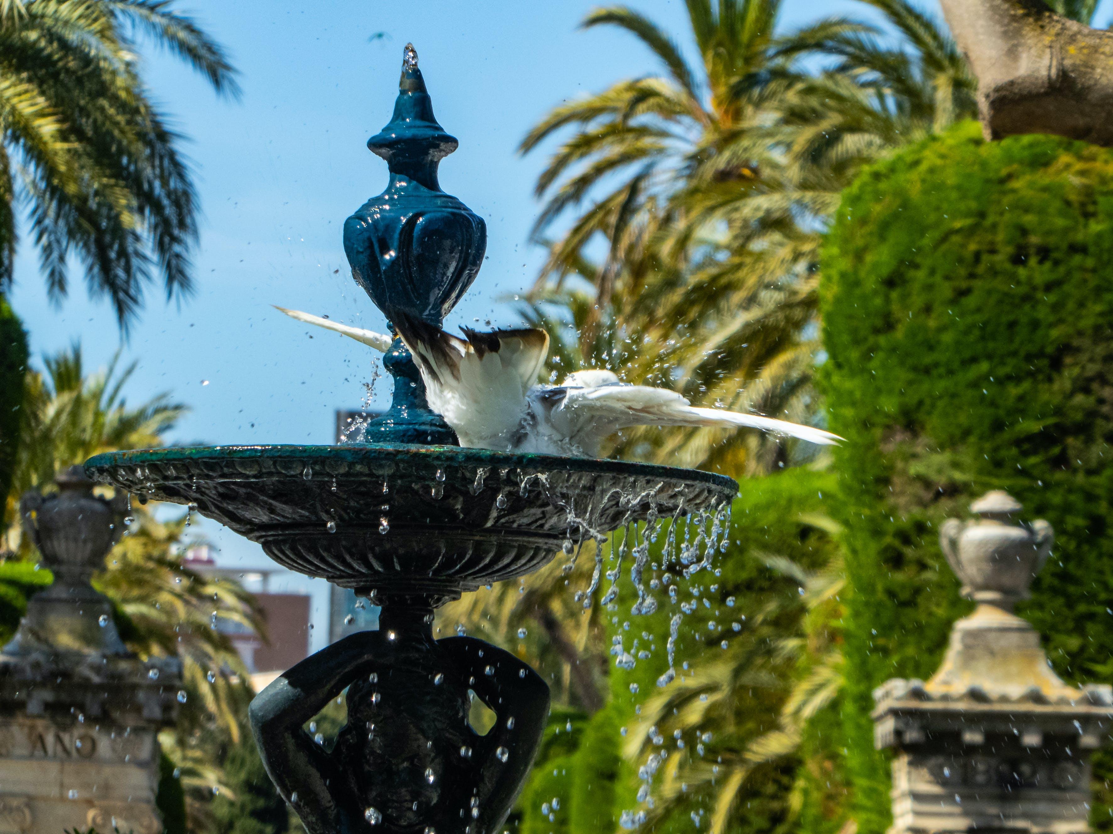 Δωρεάν στοκ φωτογραφιών με άσπρο πουλί, γλυκό νερό, Ισπανία, κολύμπι