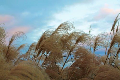 Free stock photo of autumn, colors of autumn, farm life