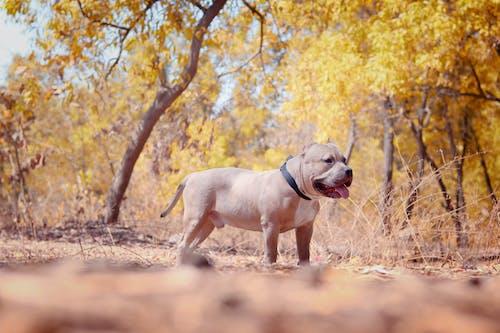 Foto d'estoc gratuïta de animal, animal domèstic, bufó, caní