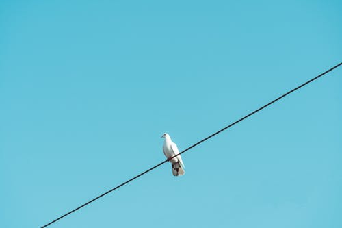 Free stock photo of clear sky, pigeon, wire