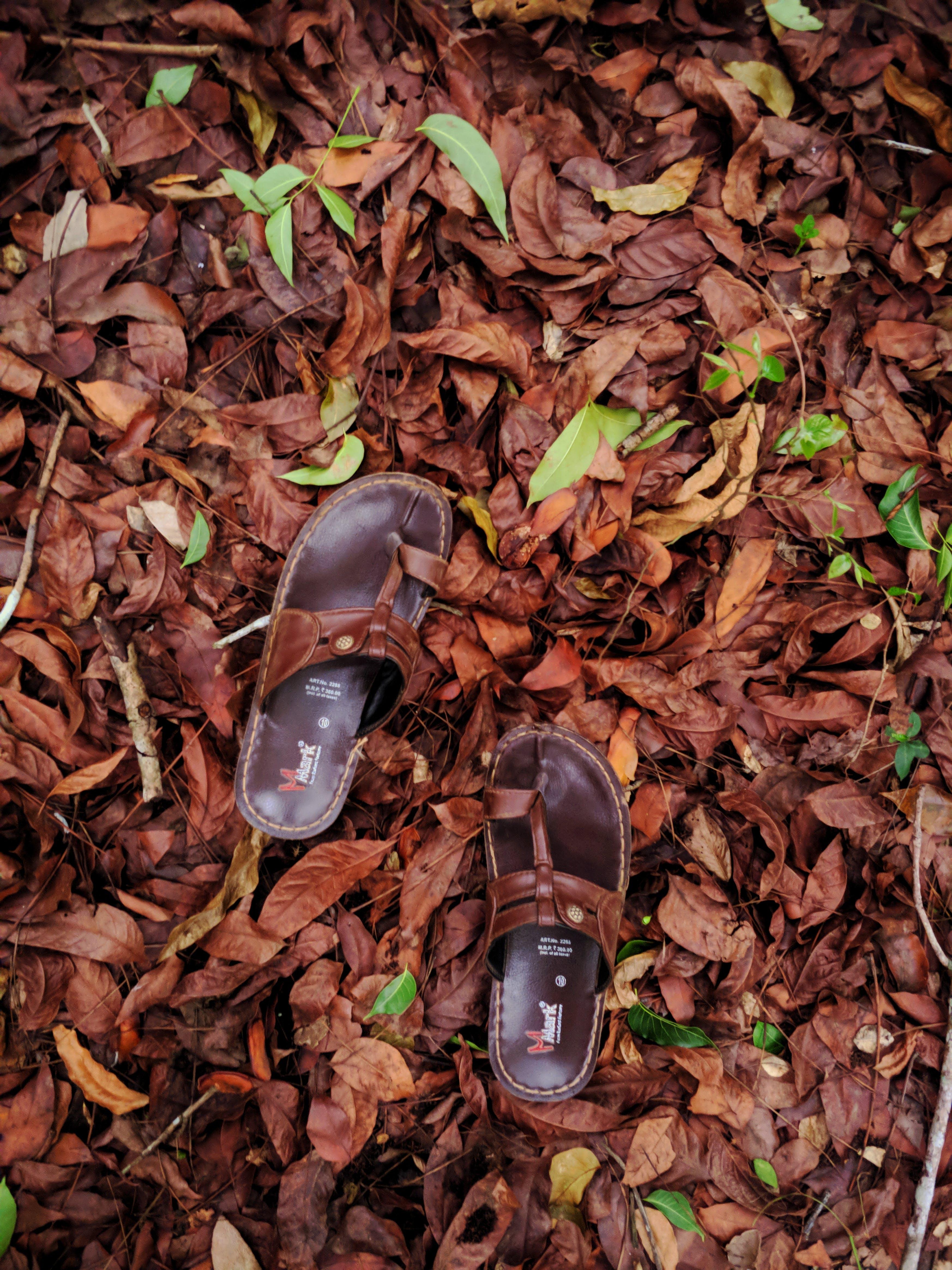 Darmowe zdjęcie z galerii z jesień, kapcie, liście, obuwie