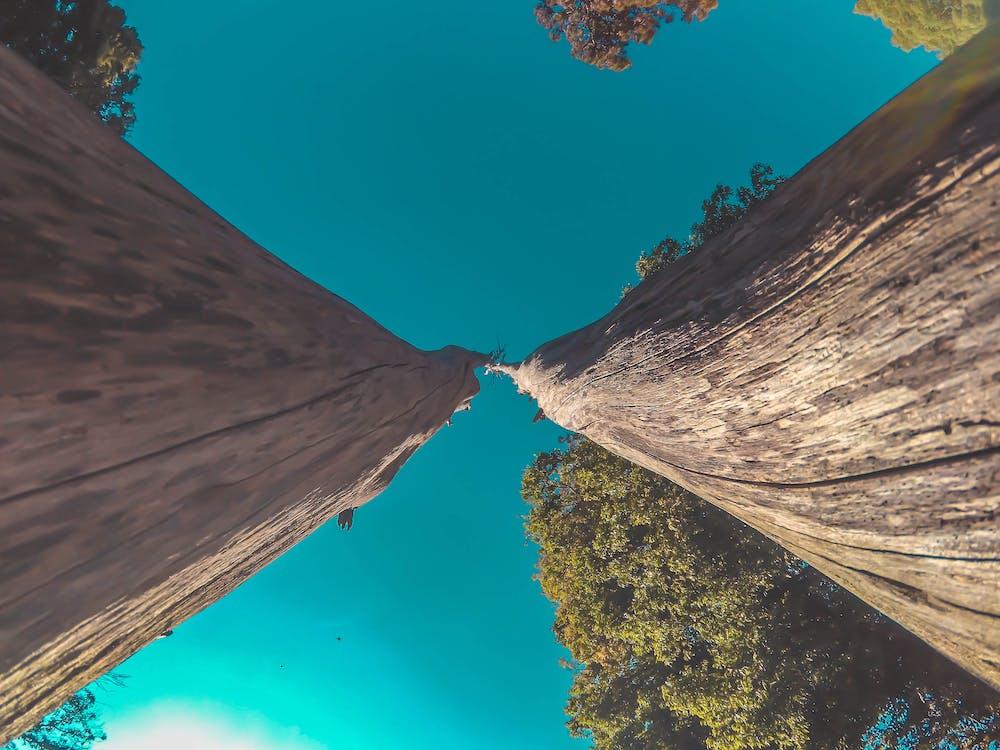 klar himmel, perspektiv, træer