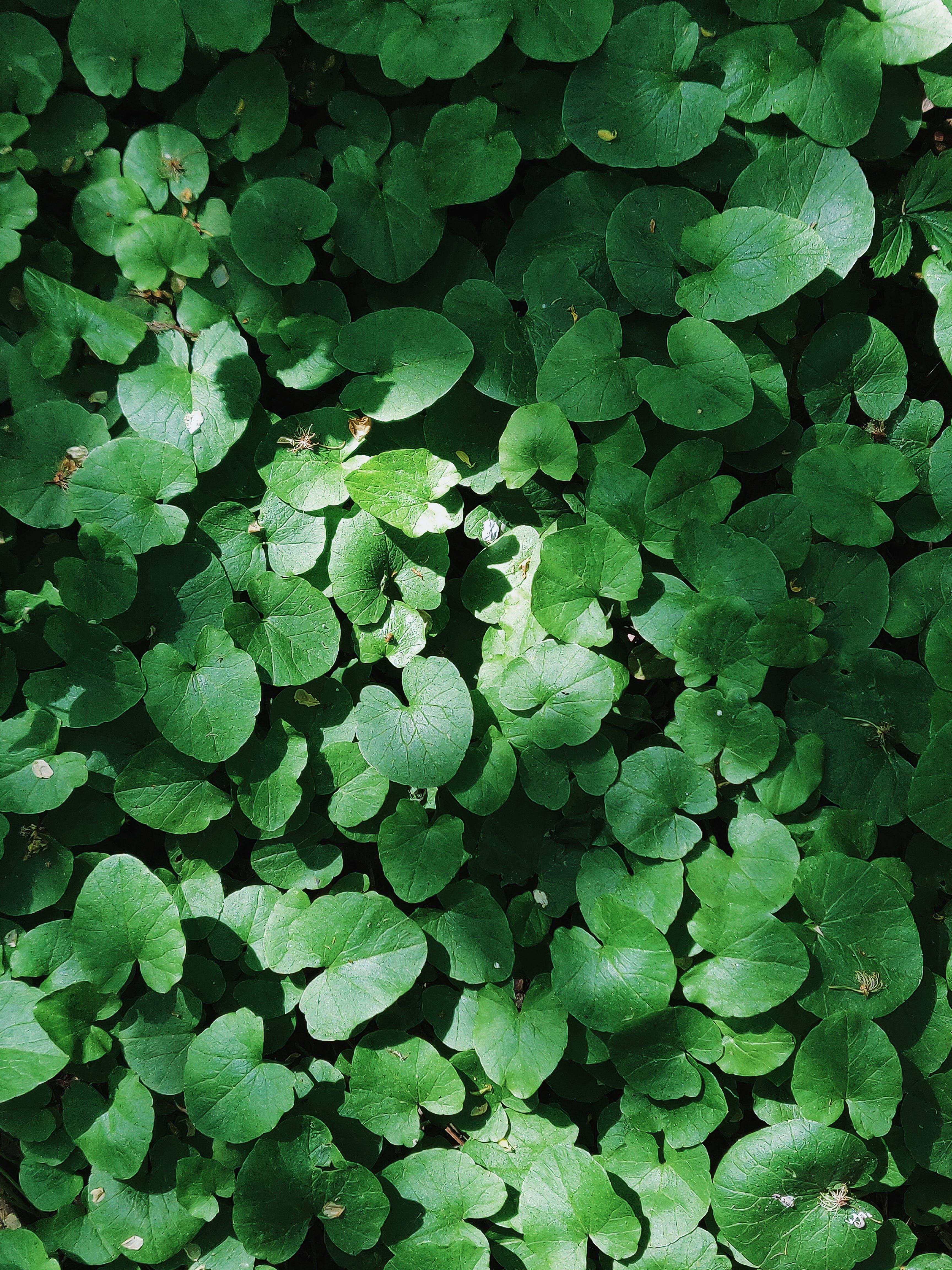 Základová fotografie zdarma na téma barva, botanický, čerstvý, environmentální