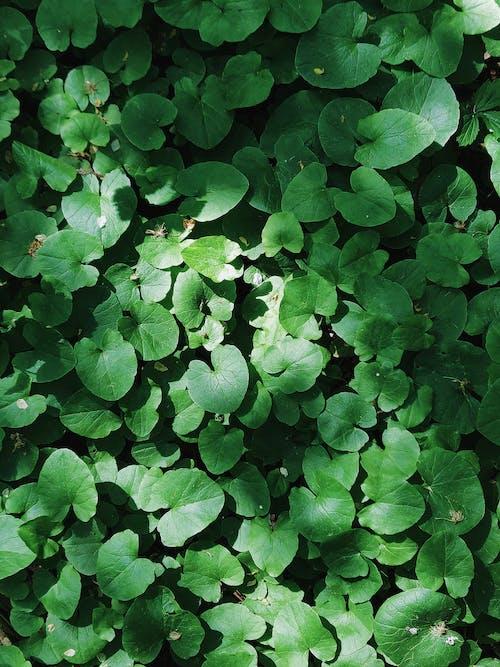 Kostnadsfri bild av botanisk, färg, färsk, fotosyntes