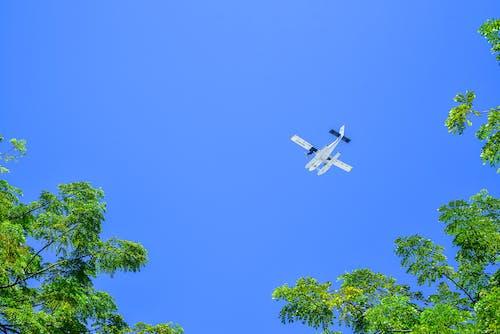 Ingyenes stockfotó alacsony szögű felvétel, ég, évszak, fák témában