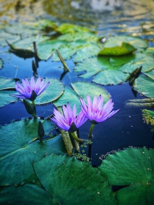 Ingyenes stockfotó élet, ingovány, kék, kék víz témában