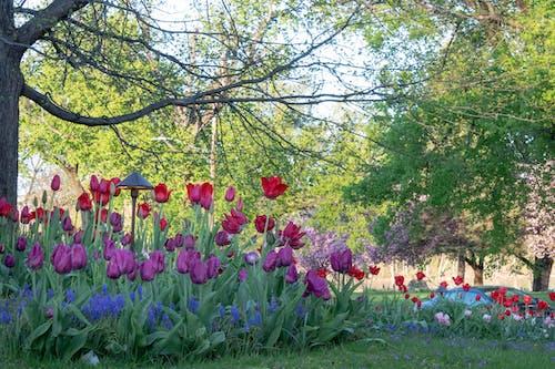 Free stock photo of flowers, purple, trees