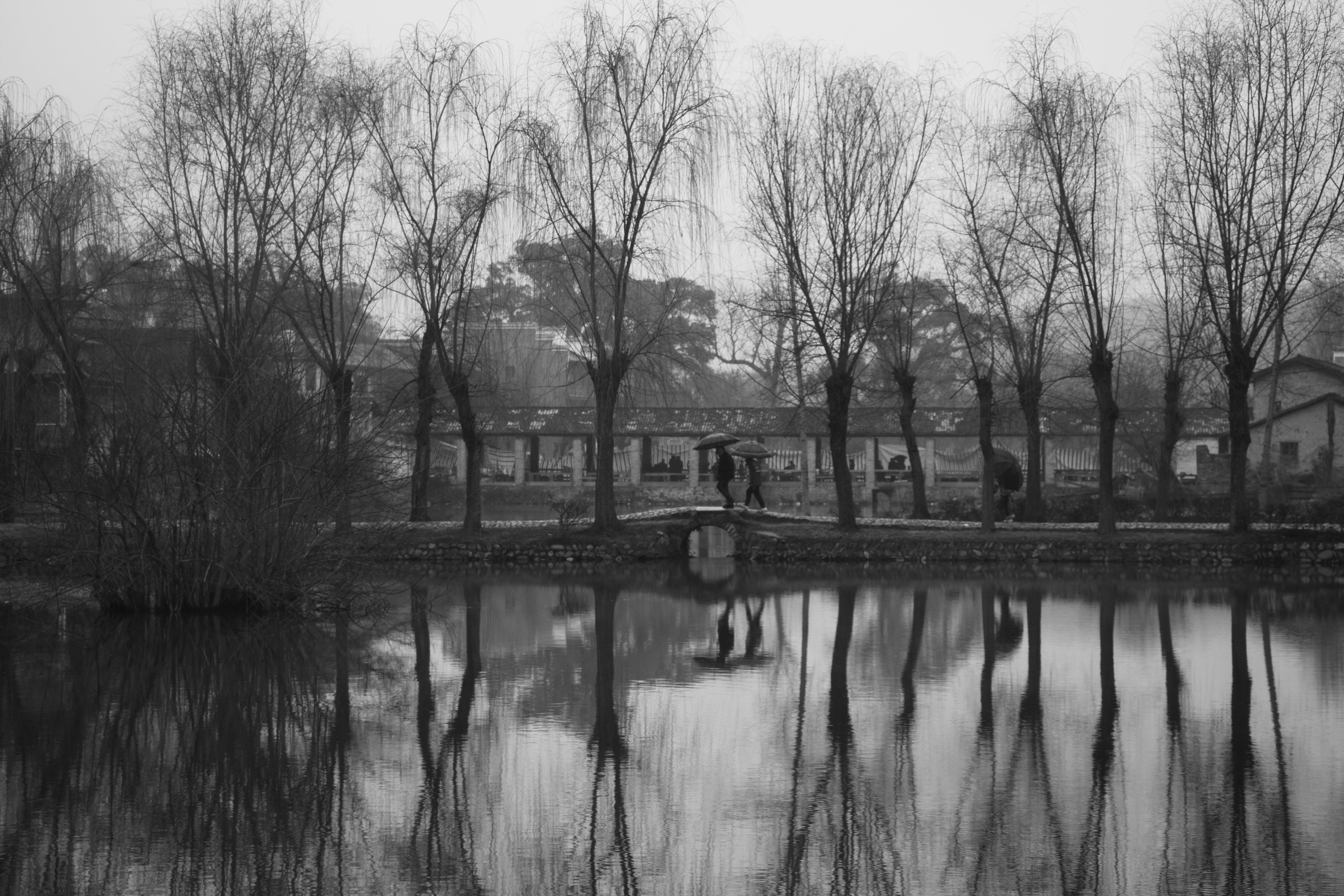 Бесплатное стоковое фото с вода, деревья, живописный, зонтик