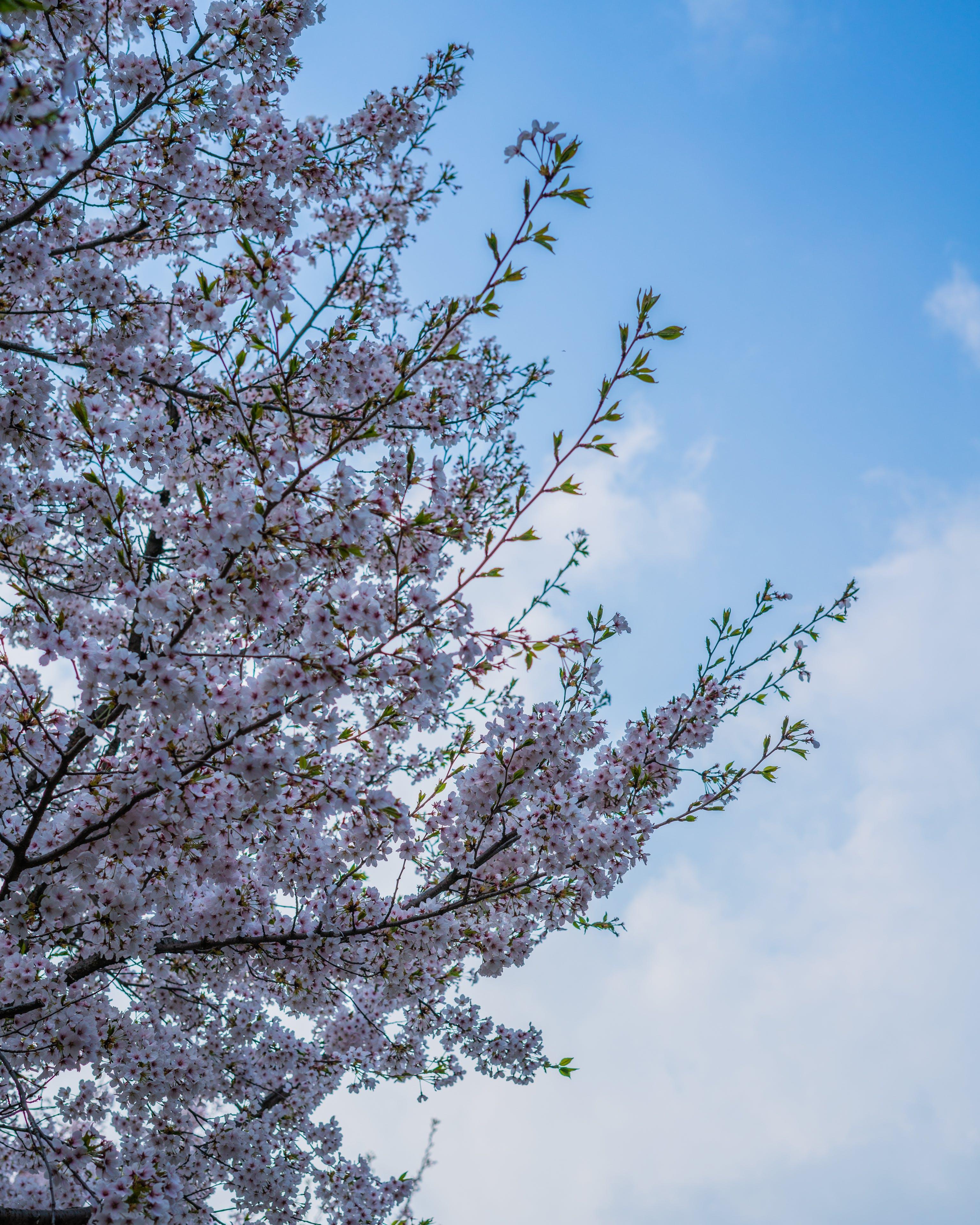 Gratis lagerfoto af blå, blomst, forårsbloem, forårsblomst