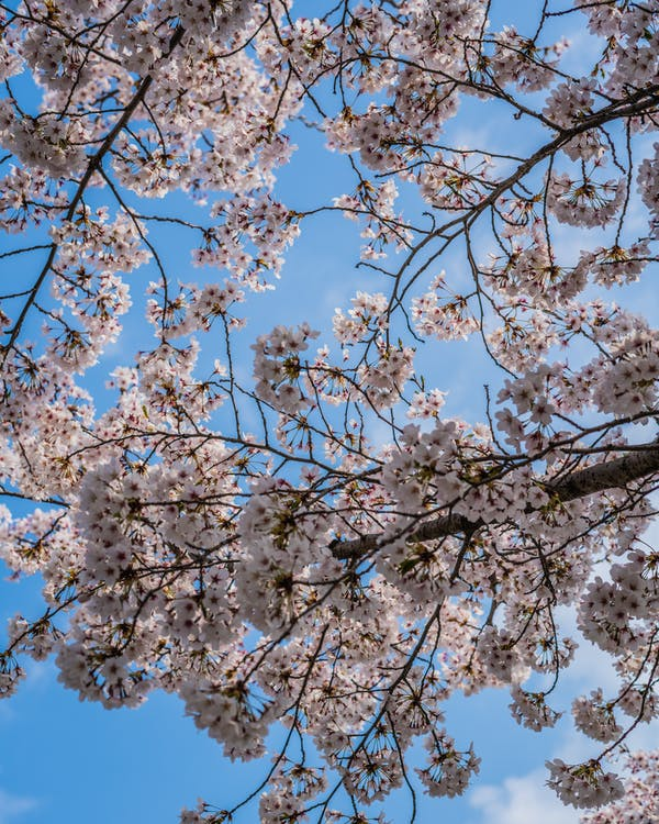 bầu trời, đẹp, hoa