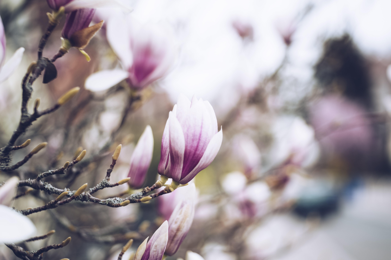 Ảnh lưu trữ miễn phí về chi nhánh, chụp gần, hoa, Hồng