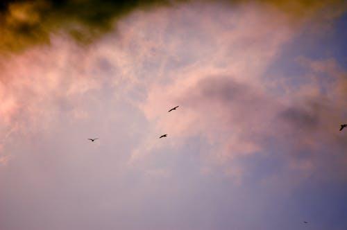 Immagine gratuita di cacciatori, mare, nuvole, nuvole rosa