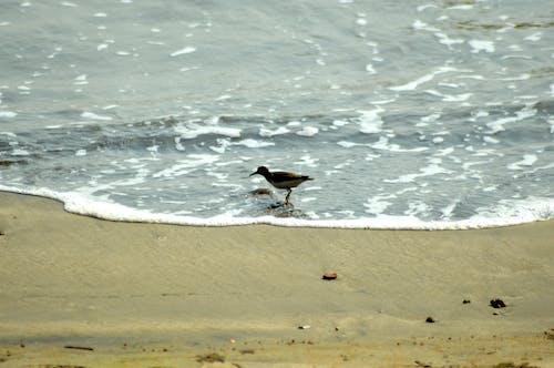 Immagine gratuita di assolo, brid, mare, oceano