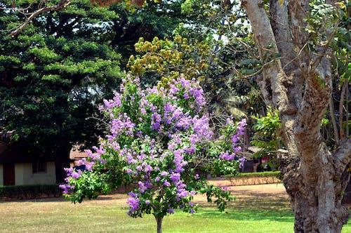 Immagine gratuita di fiori, fiori rosa
