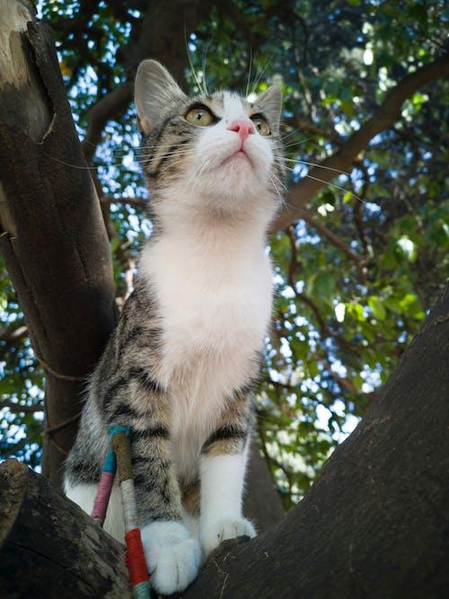 Ilmainen kuvapankkikuva tunnisteilla eläin, eläinkuvaus, katsominen, kissa