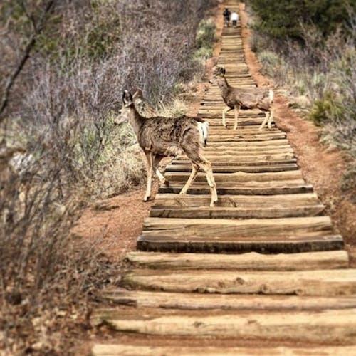 야생동물, 콜로라도의 무료 스톡 사진