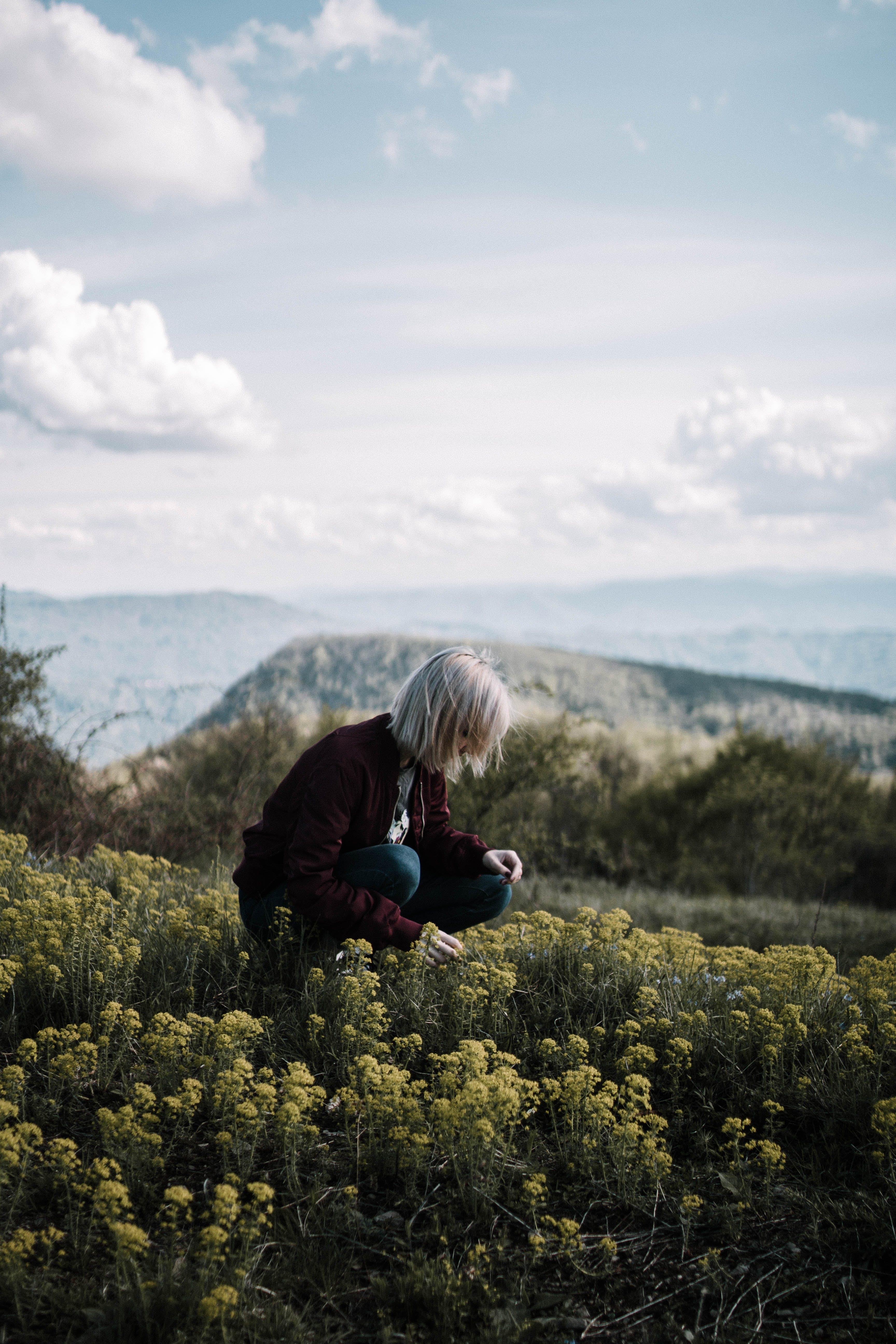 Gratis lagerfoto af agerjord, bane, blomster, dagslys