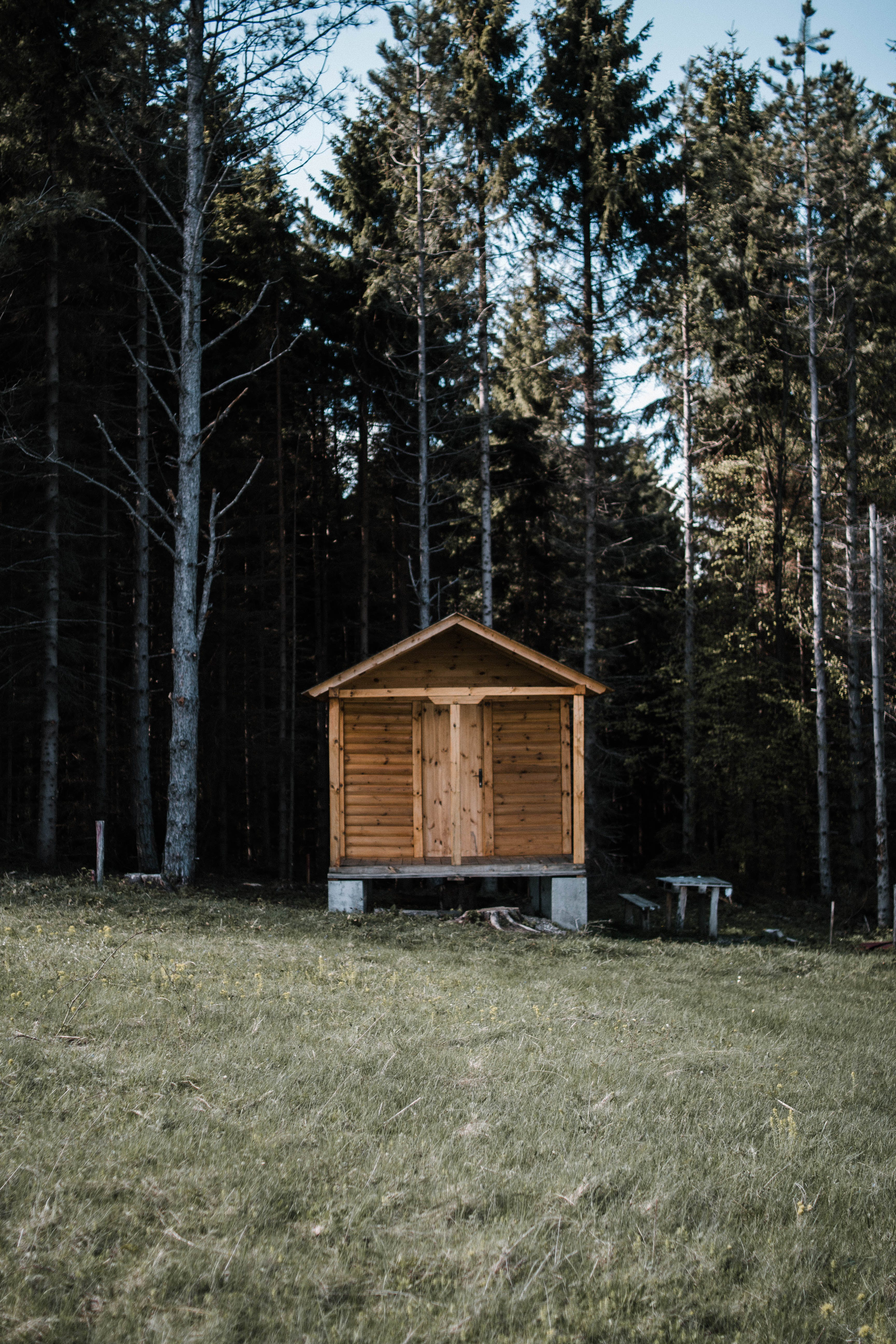 Brown Wooden Cabin Near Trees