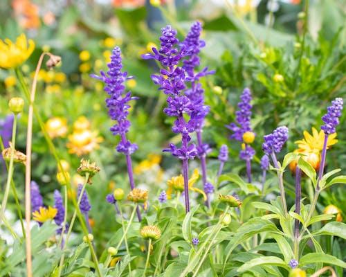 Foto profissional grátis de cheio de cor, flores bonitas, imagem de fundo