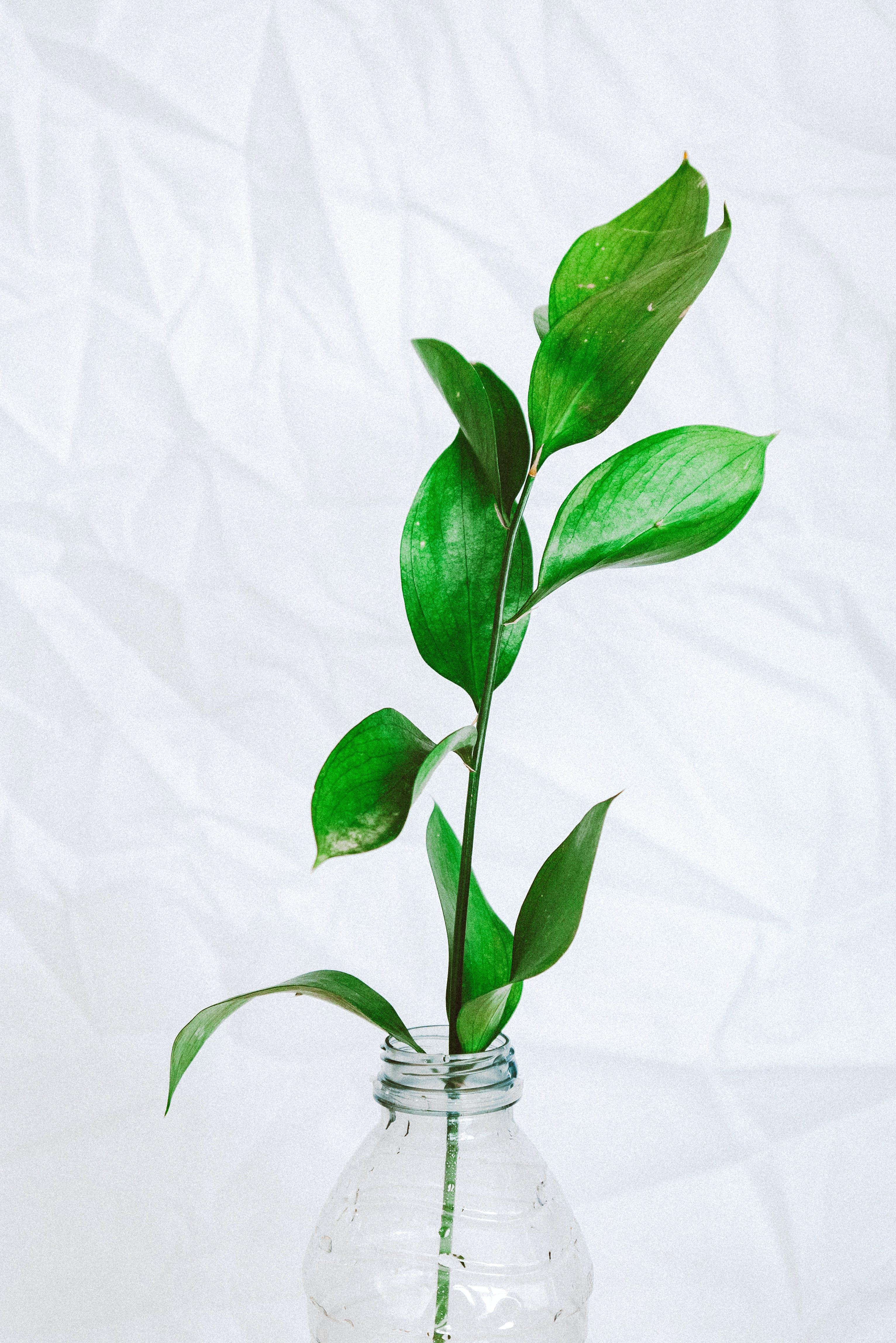 Kostenloses Stock Foto zu flasche, grazil, grün, grüne blätter